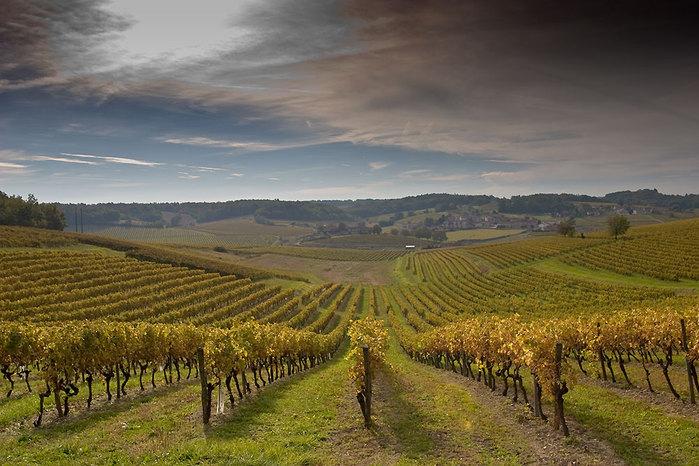 Виноградники Алазанской долины
