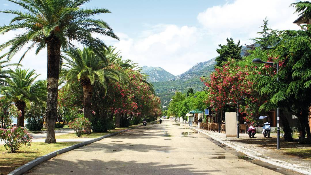 Пальмовая алея в городе