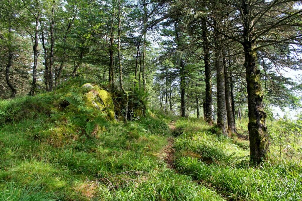 Лесные тропы Флёйена