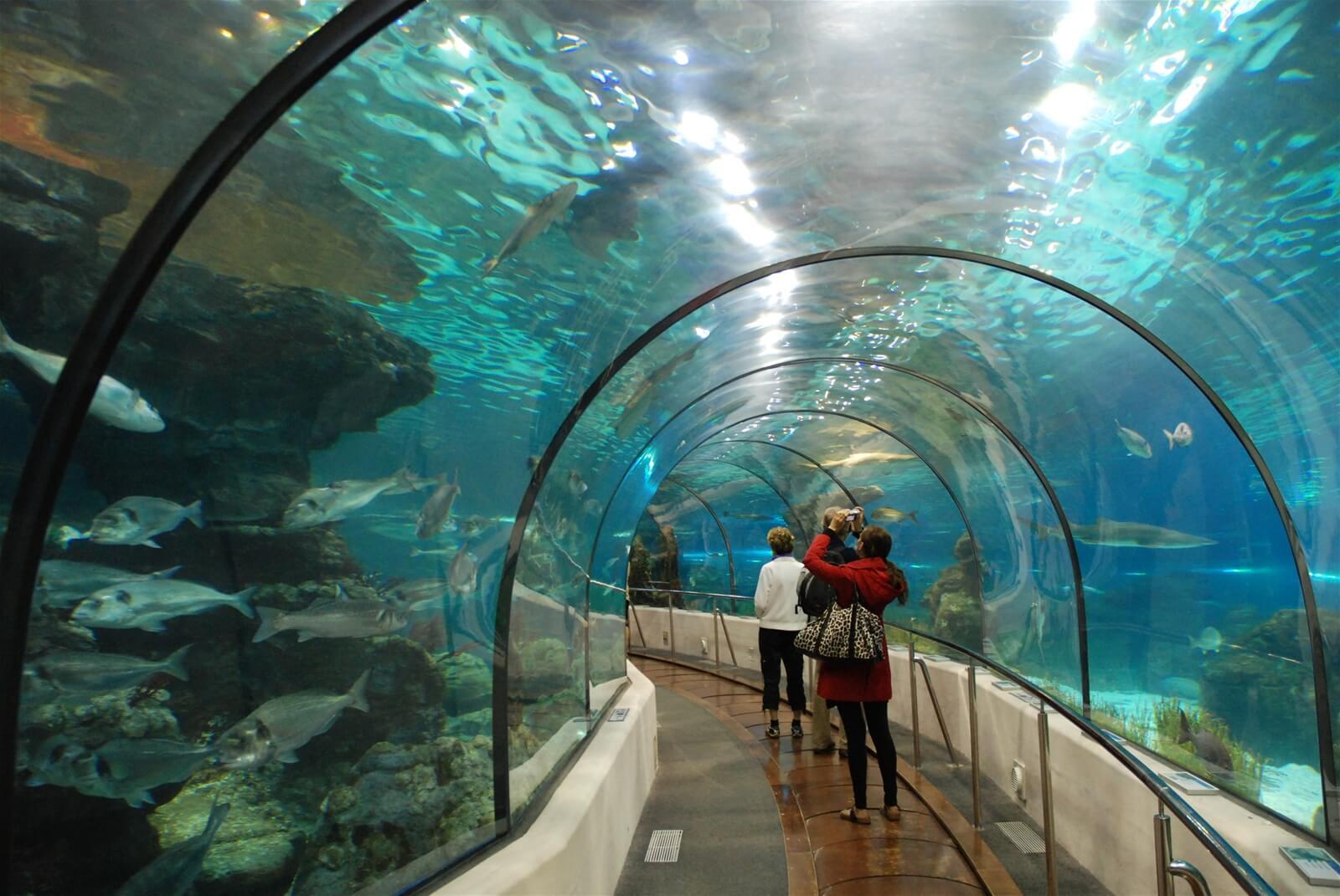 Фото: посетители в океанариуме Винперл