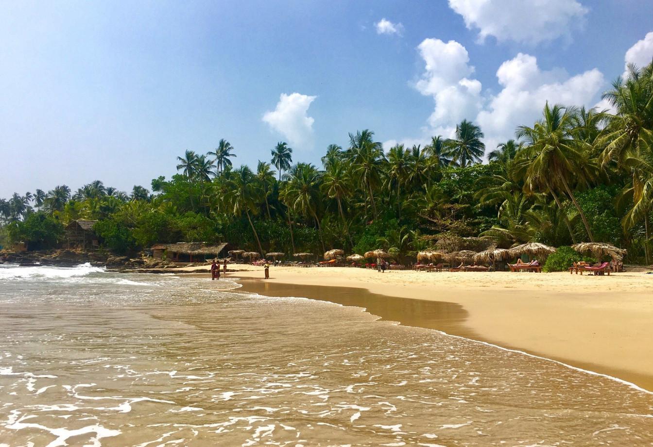 Пальмовая роща на пляже Гоямбокка