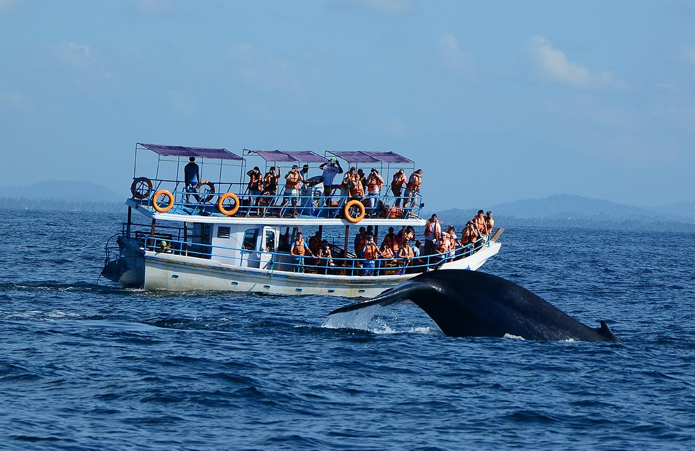 Фото: наблюдение за китом