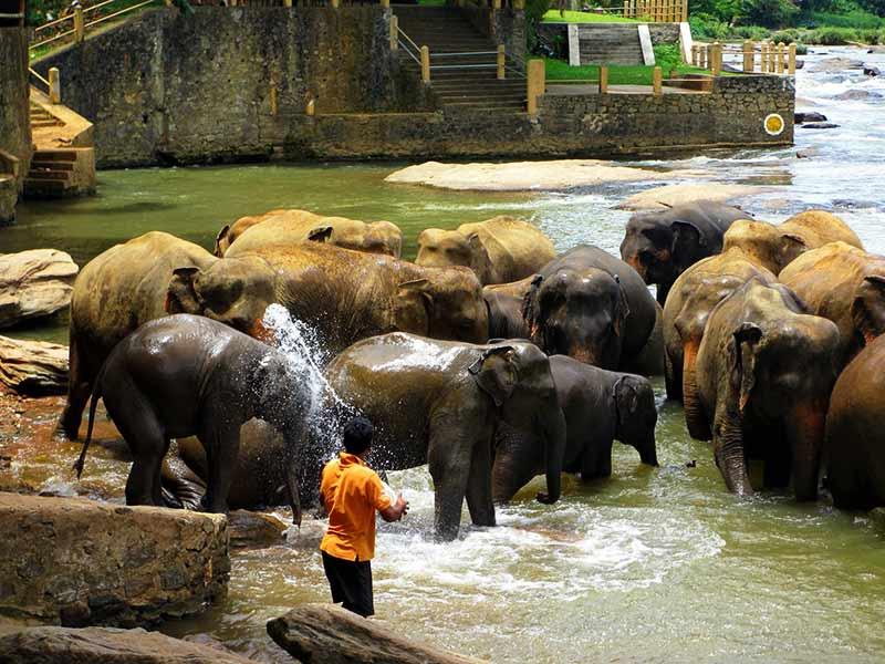 Фото: купание слонов в Пиннавеле