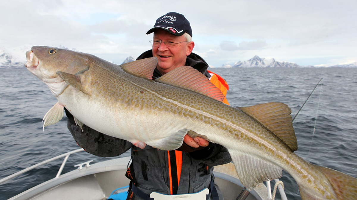 Такую рыбу можно поймать на рыбалке