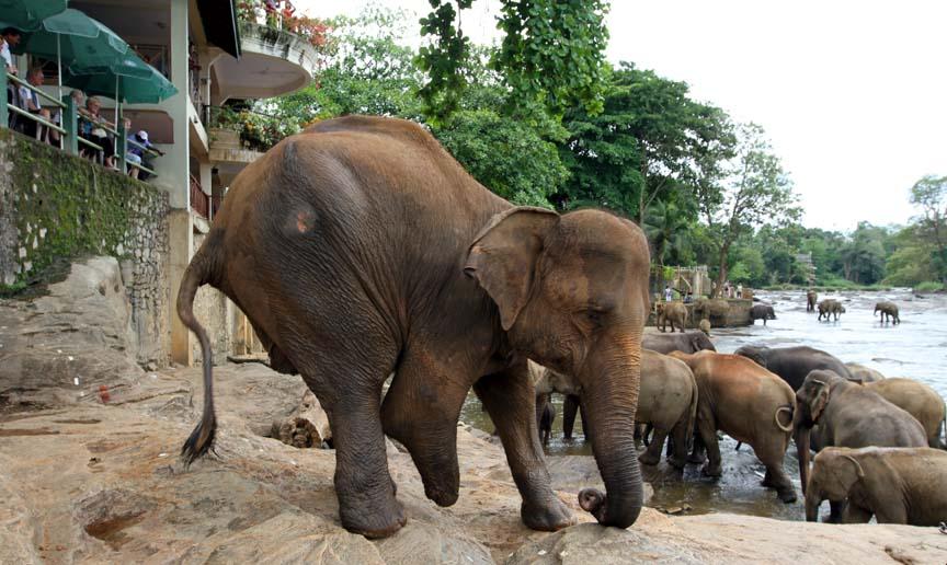 Фото: слон без ноги