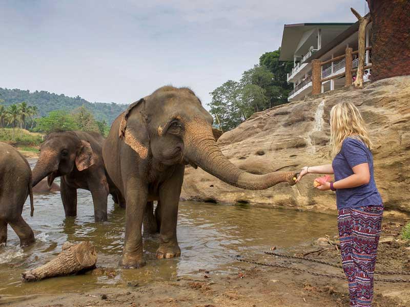Туристка кормит слона