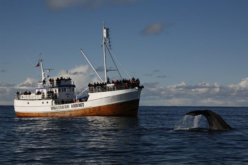 Китовое сафари на Лофотенах