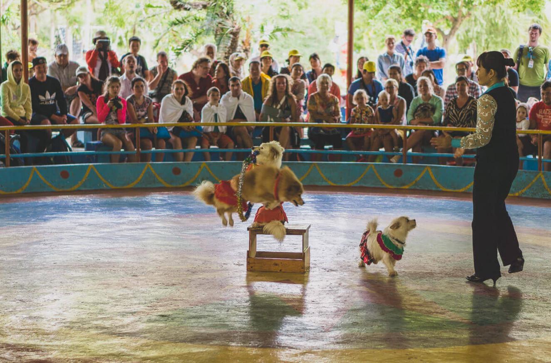 Цирковое представление на острове обезьян