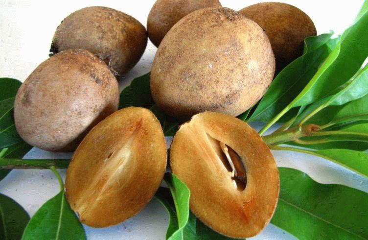 Спелые плоды саподриллы