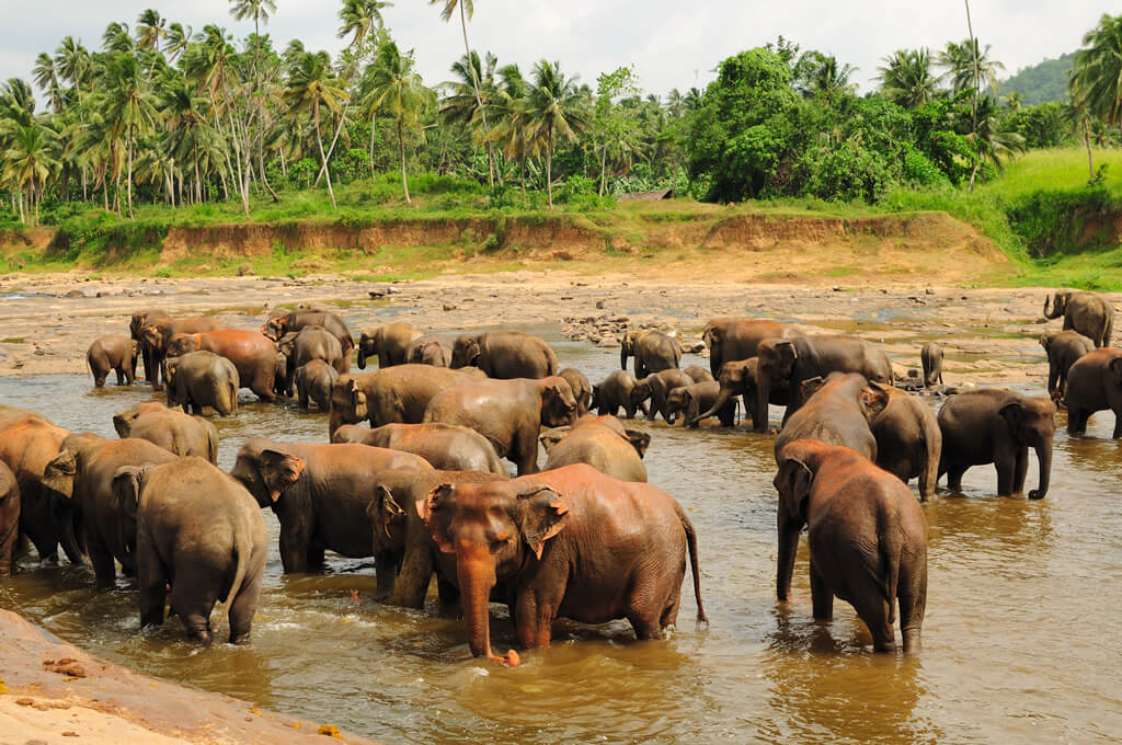 Фото: слоны купаются в реке