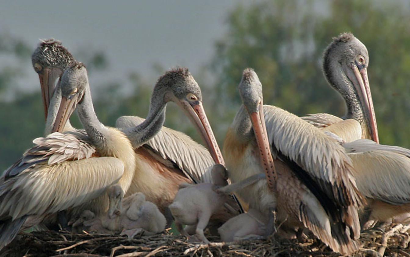 Птичье семейство в заповеднике