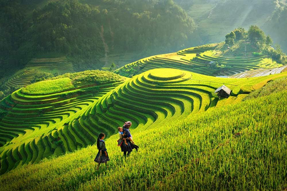 Фото: террасные рисовые поля