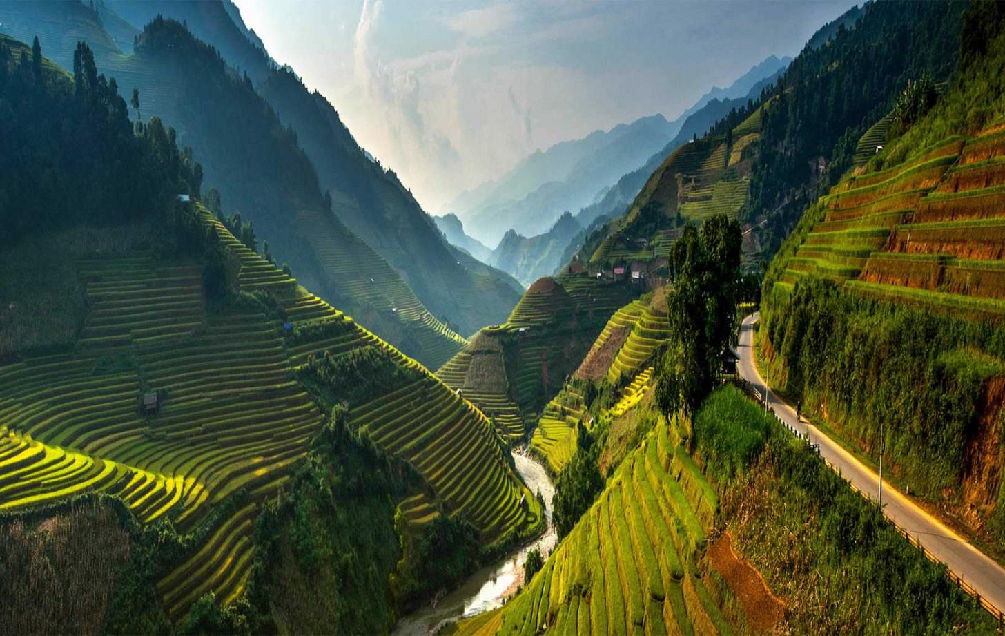 Рисовые поля неподалеку от Сапы