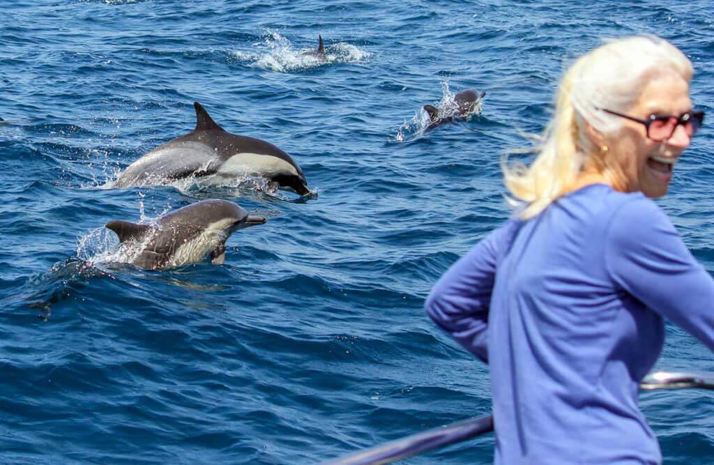 Дельфин-сафари