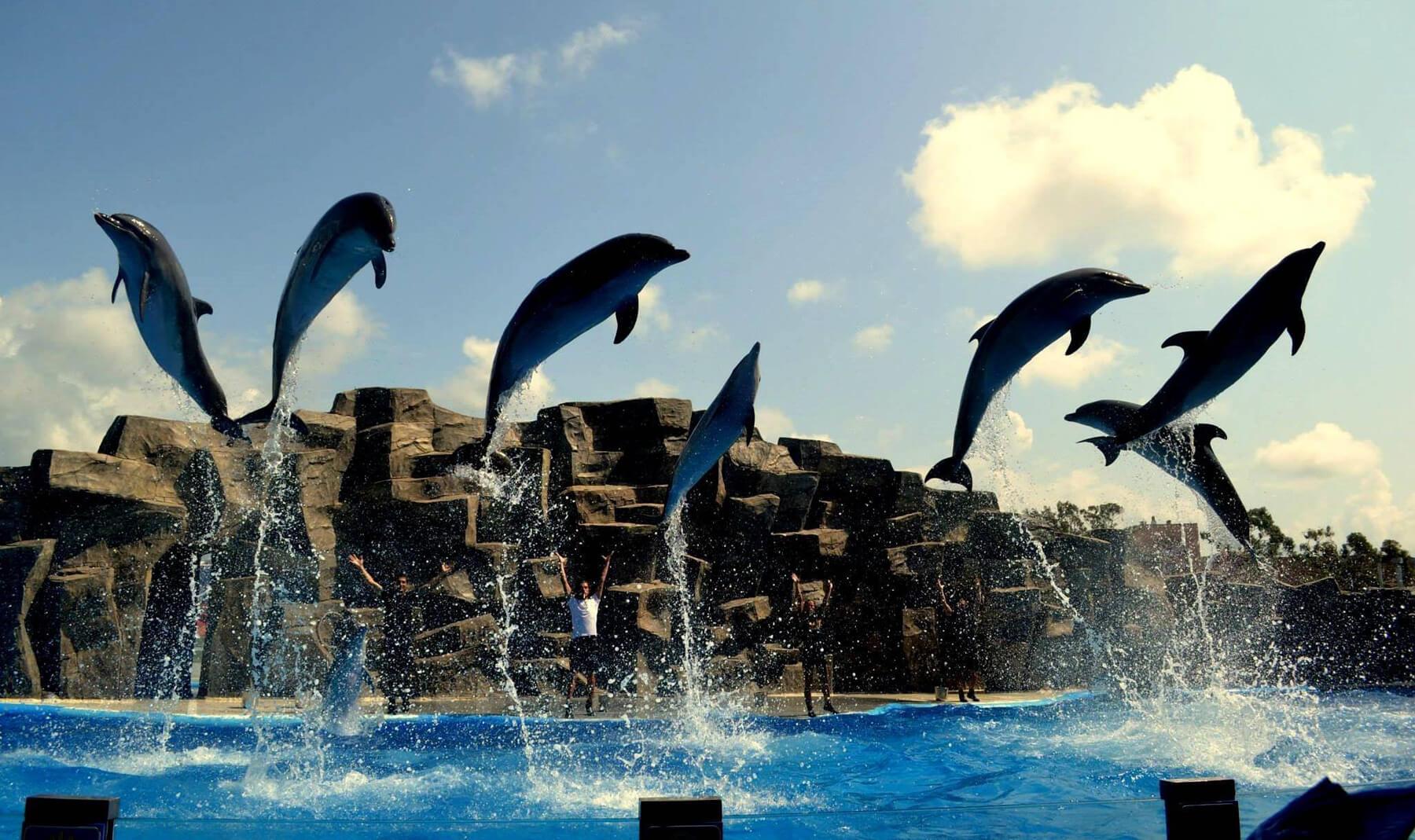 Представление в дельфинарии в Батуми