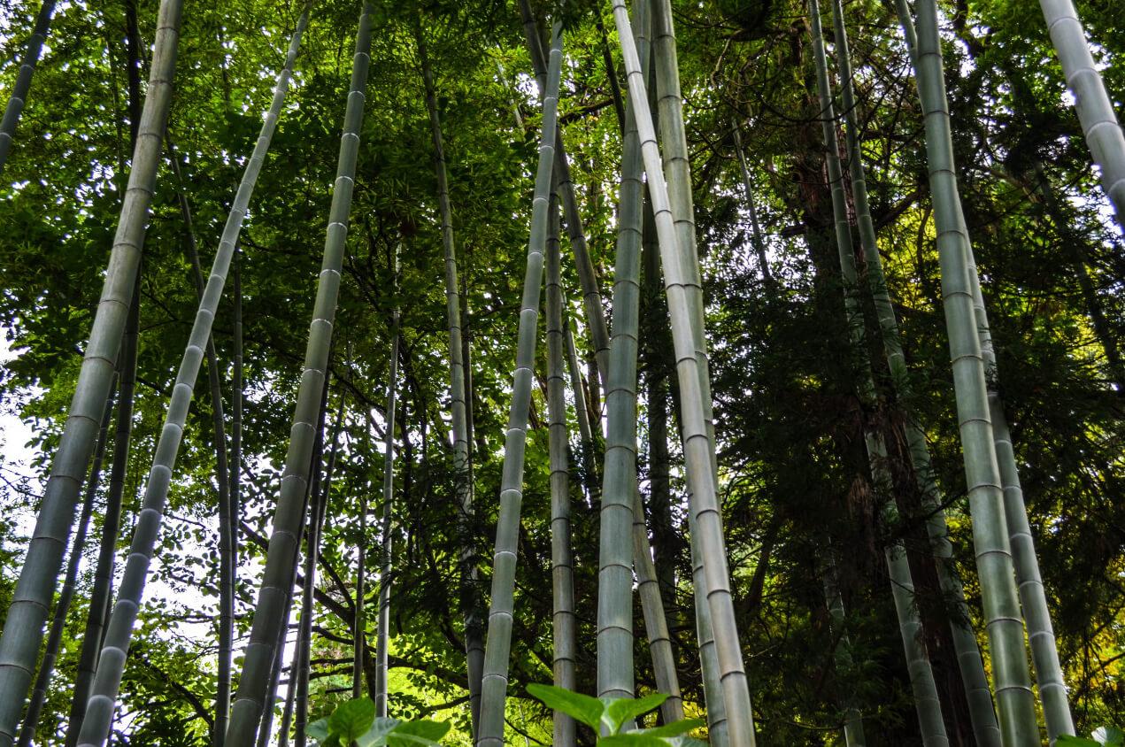 Пальмы в Батумском ботаническом саде