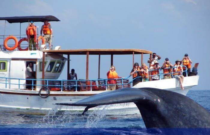 На экскурсию к китам