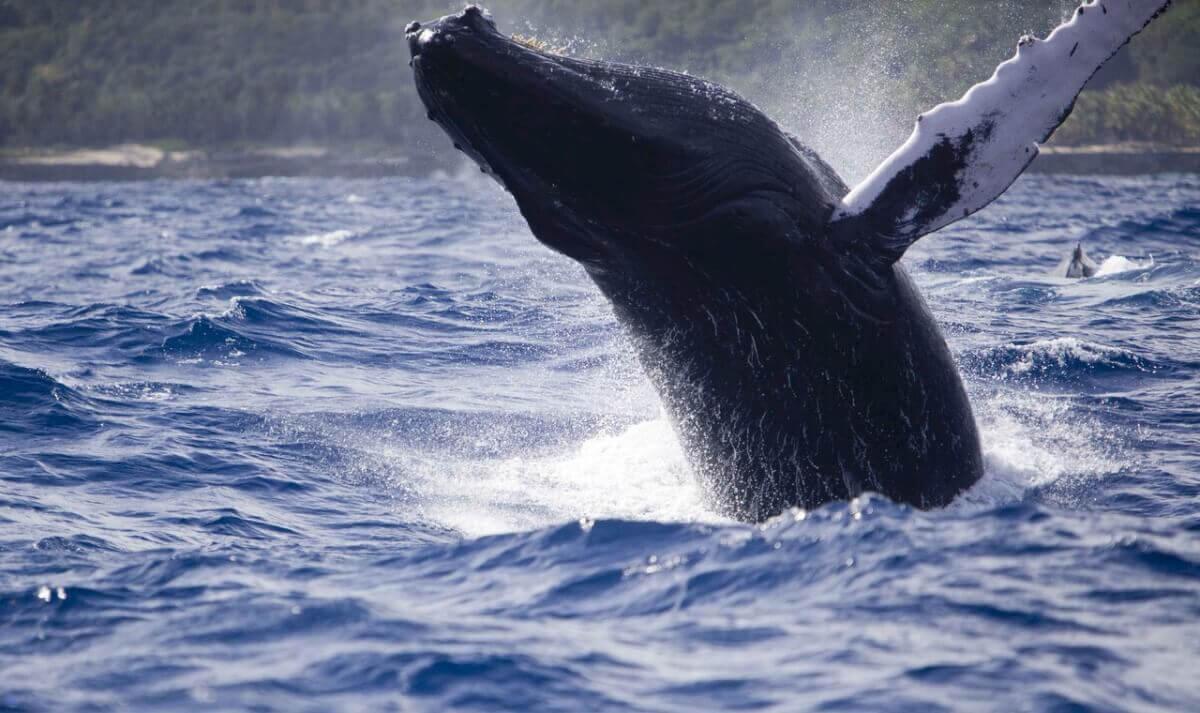 Экскурсии к китам