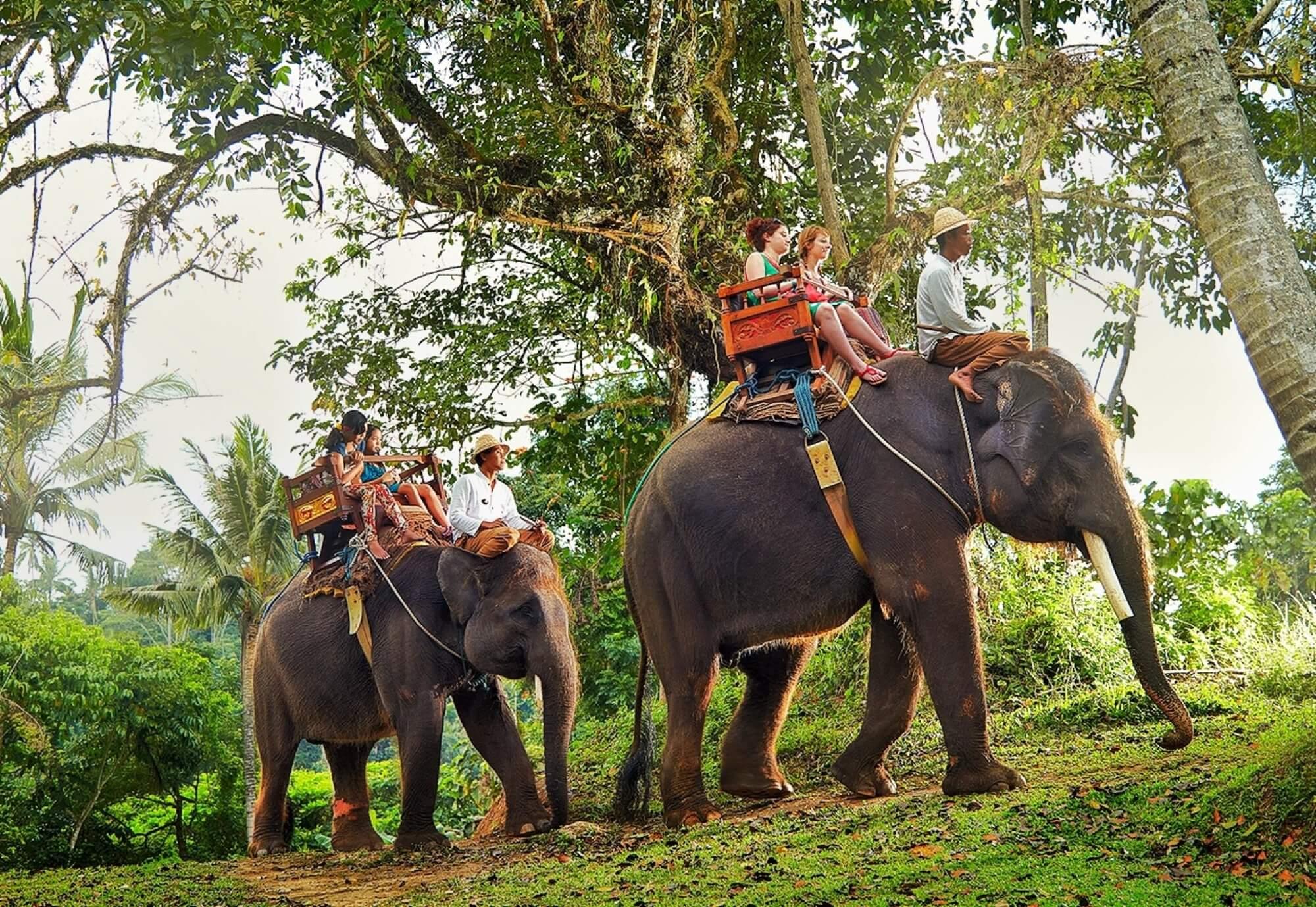Cафари Шри-Ланка