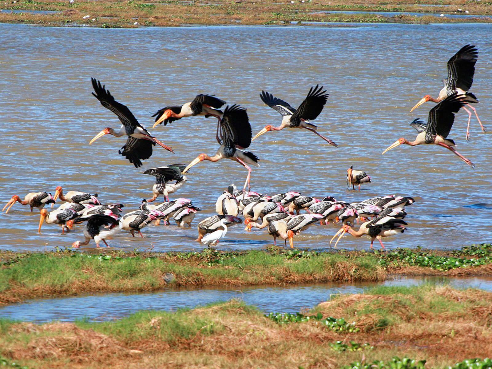 Птицы на водохранилище парка Миннерия