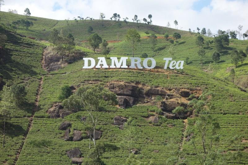 Чайная фабрика Damro (Macwoods)