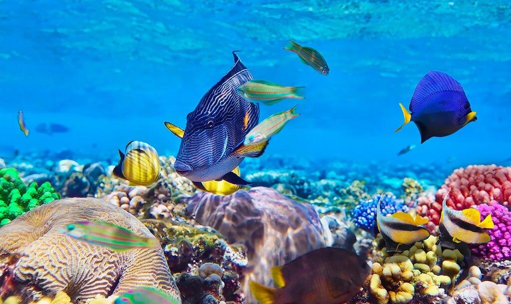 Много разноцветных рыб на рифе около острова