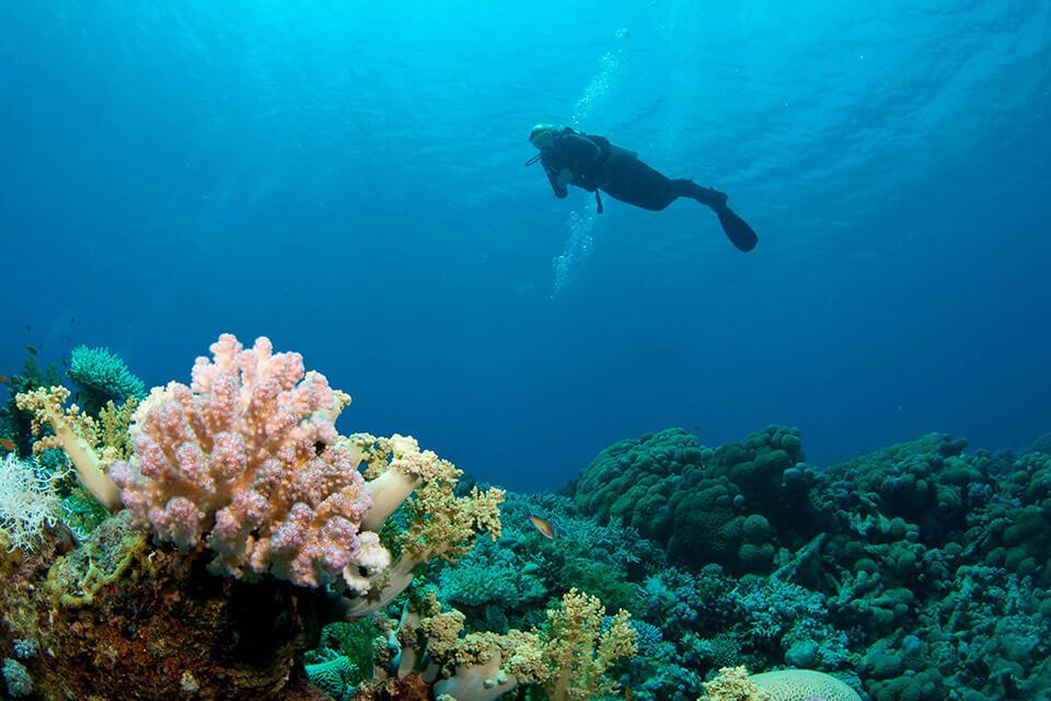 Дайвинг с Atlantis Diving Center