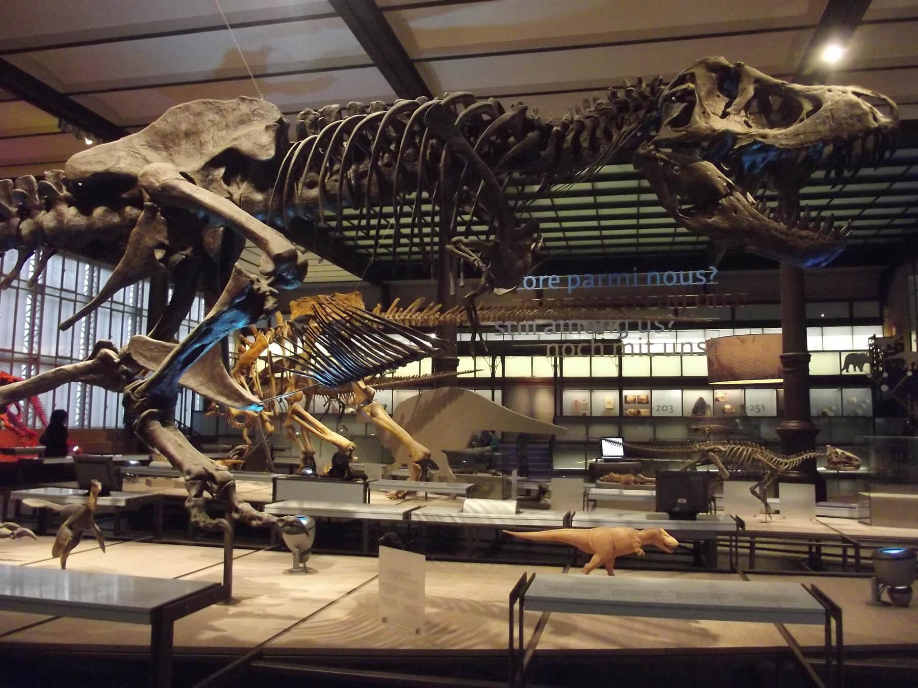 В галерее динозавров музея естественных наук