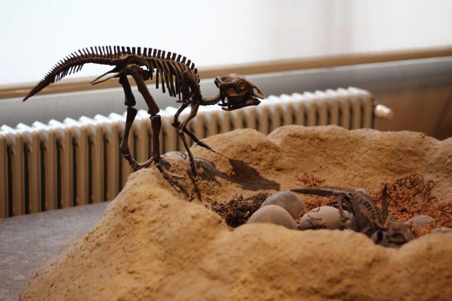 На стендах воссозданы различные сцены из жизни динозавров