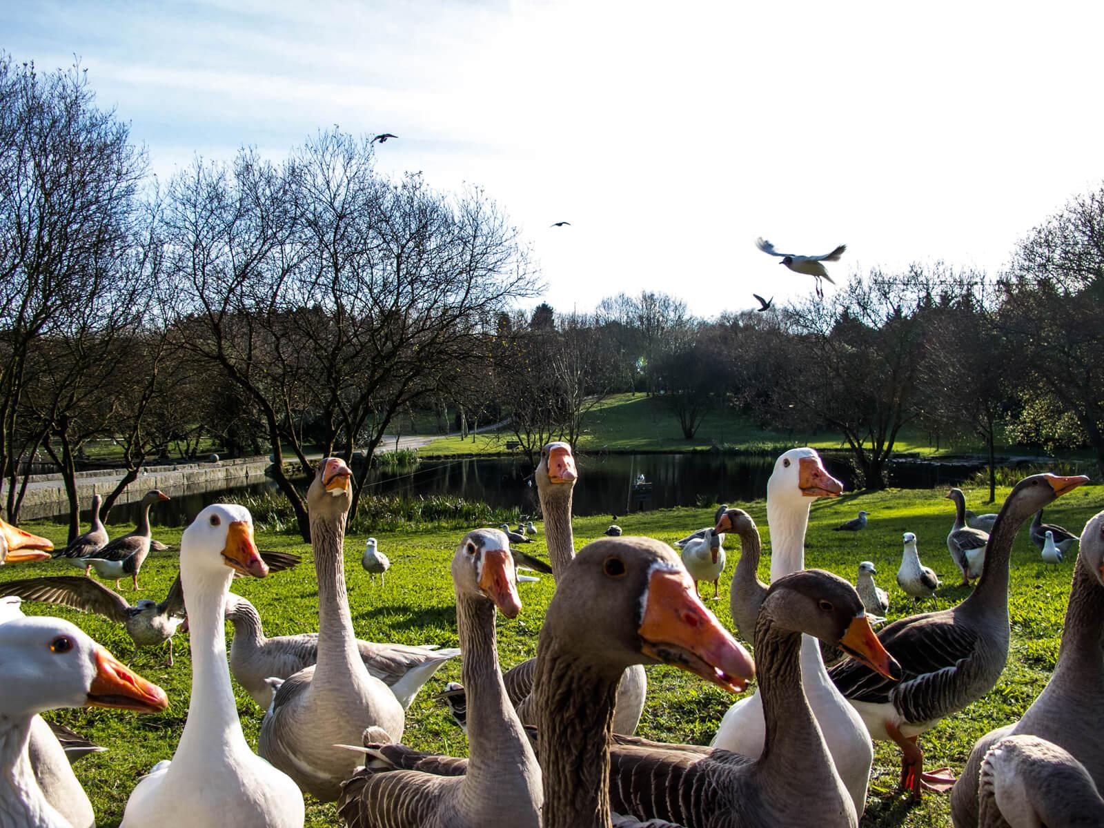 Птицы в парке которые не боятся людей