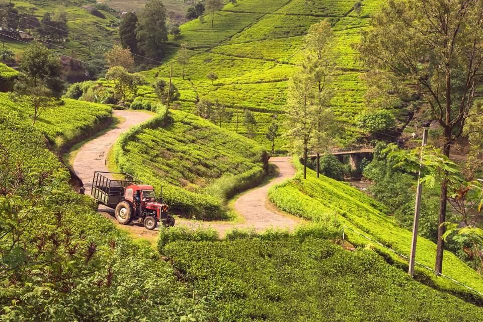 Узкие дороги Шри-Ланки