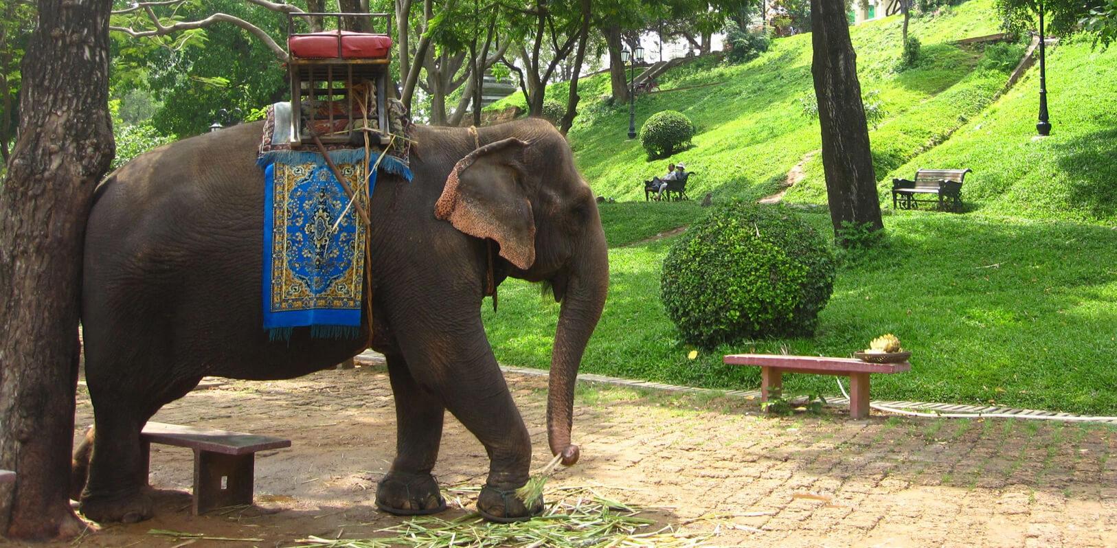 Можно прокатиться на слоне