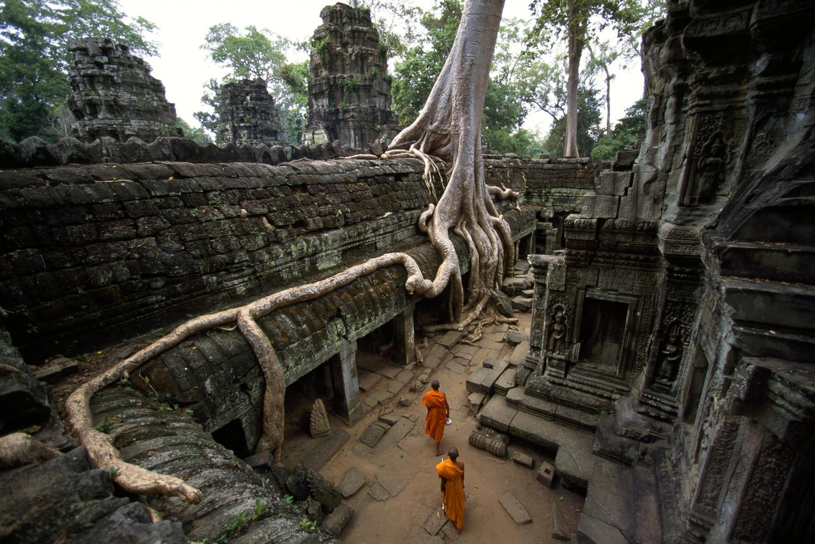 Дерево в храме Та Пром