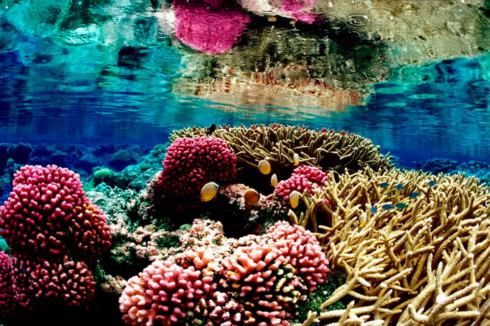 Подводная отмель Tanjung Mak Cantik