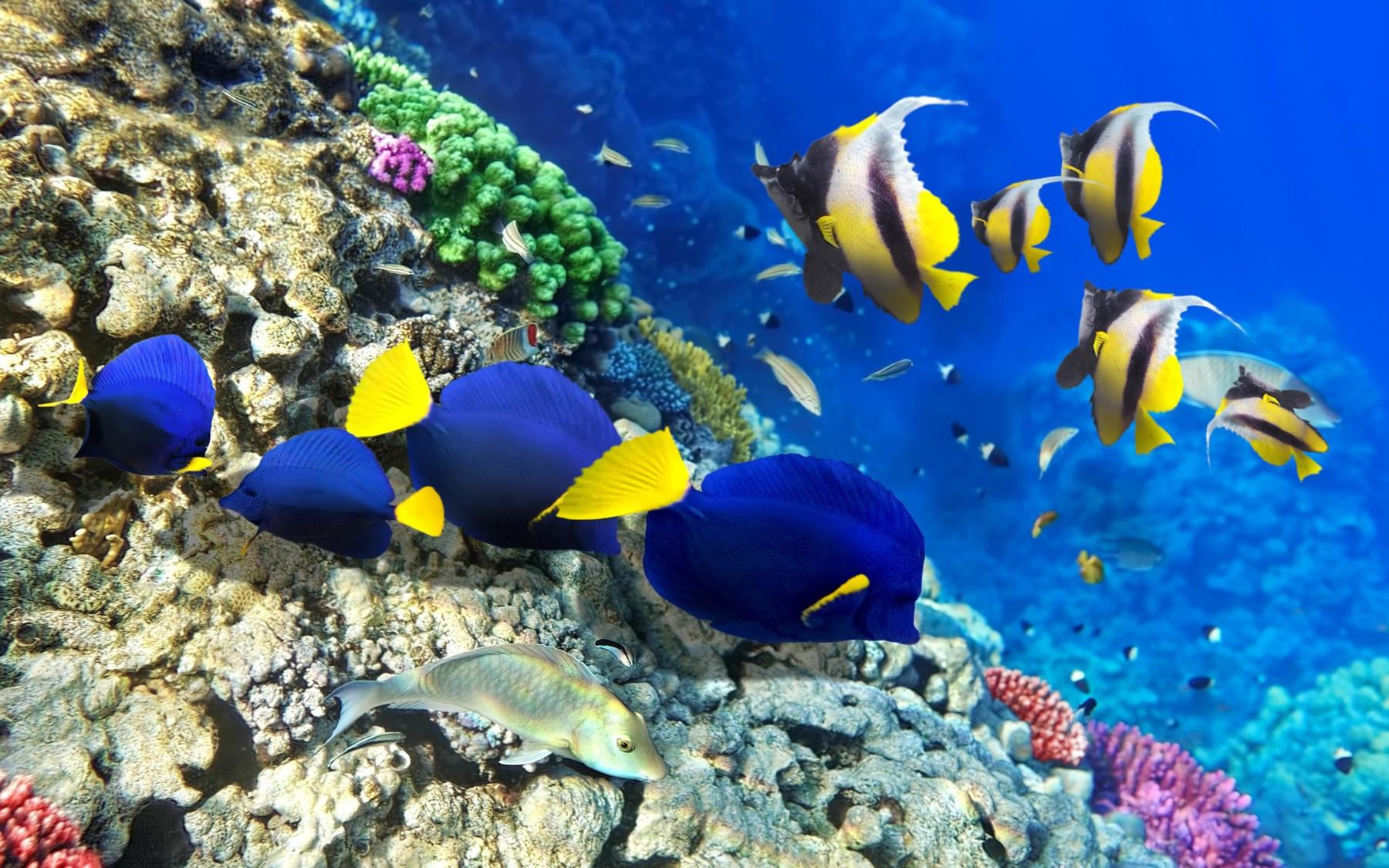 Подводный мир острова Тиоман