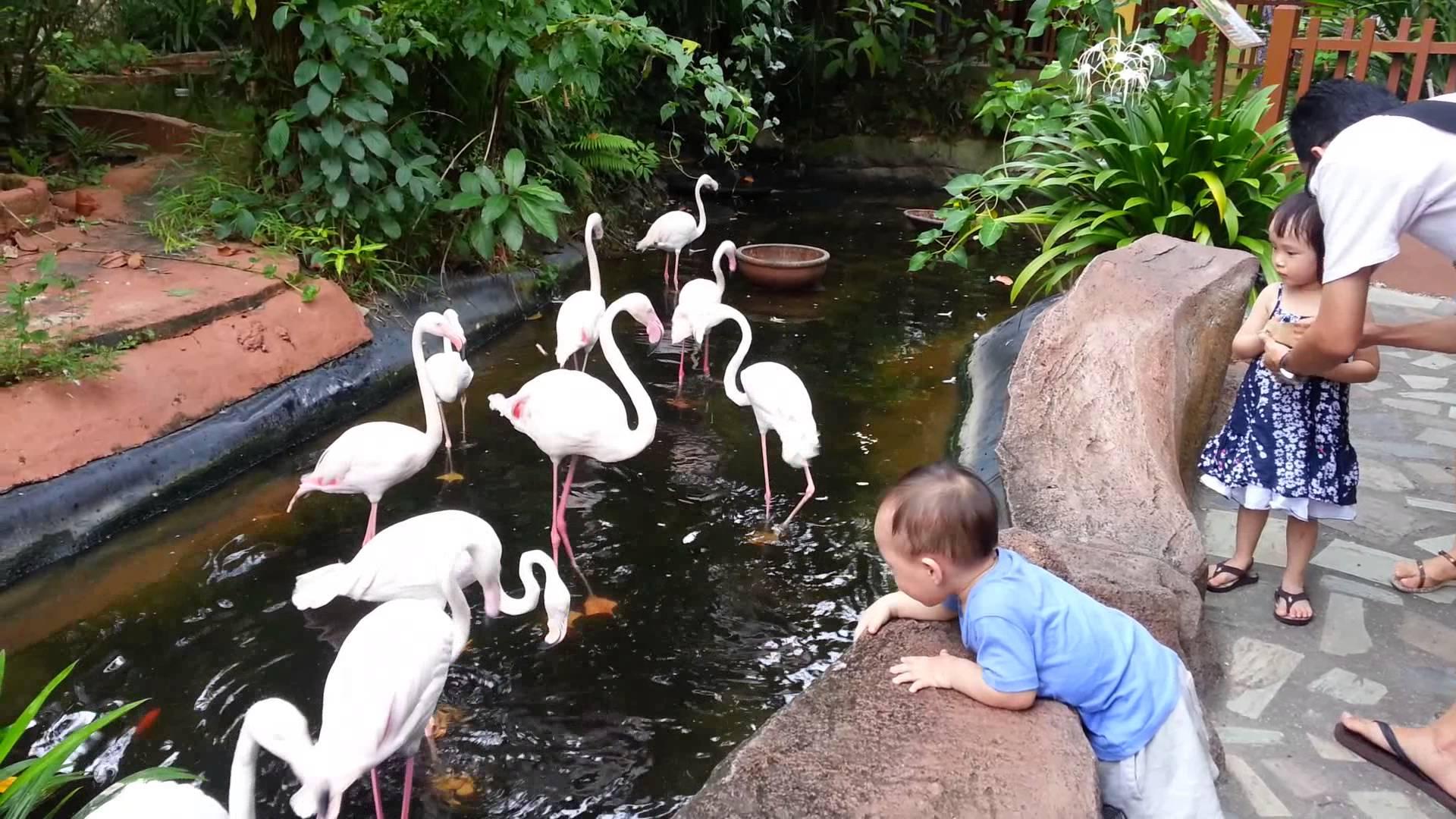 Птицы в парке Bird Paradise