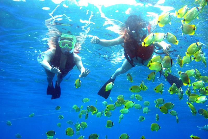 Снорклинг в Морском парке Пулау Паяр