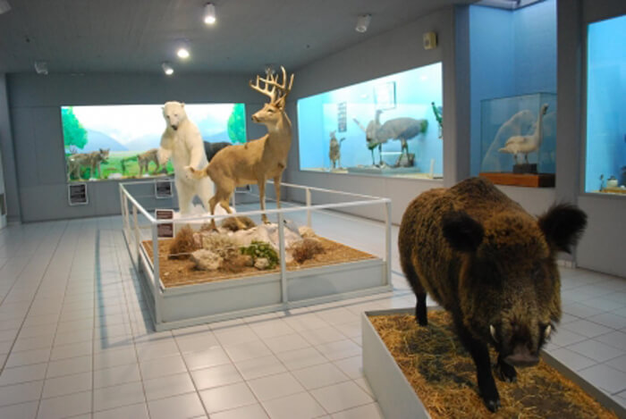 Палеонтологический музей (The Samos Paleontological Museum)