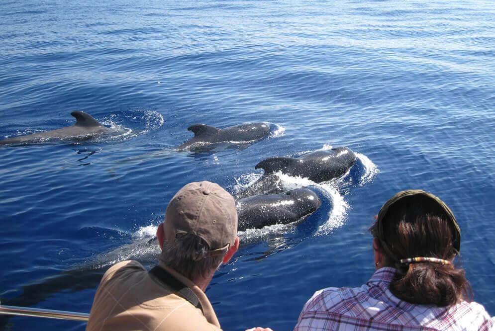 Экскурсия по наблюдению за дельфинами