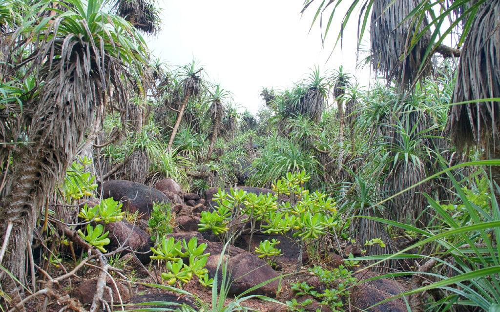 Тропический лес Румассала