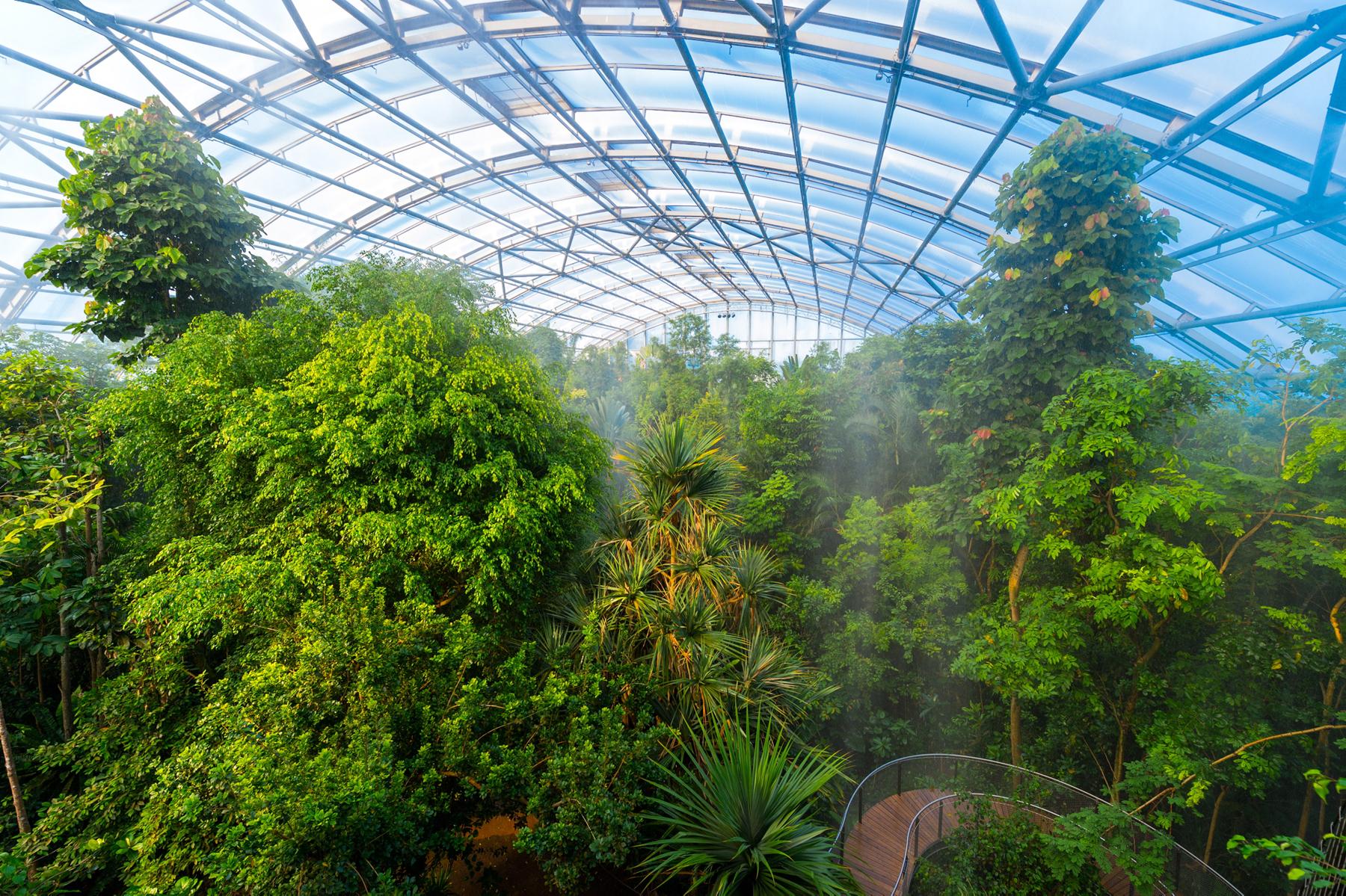 В тропическом павильйоне «Мазоала»