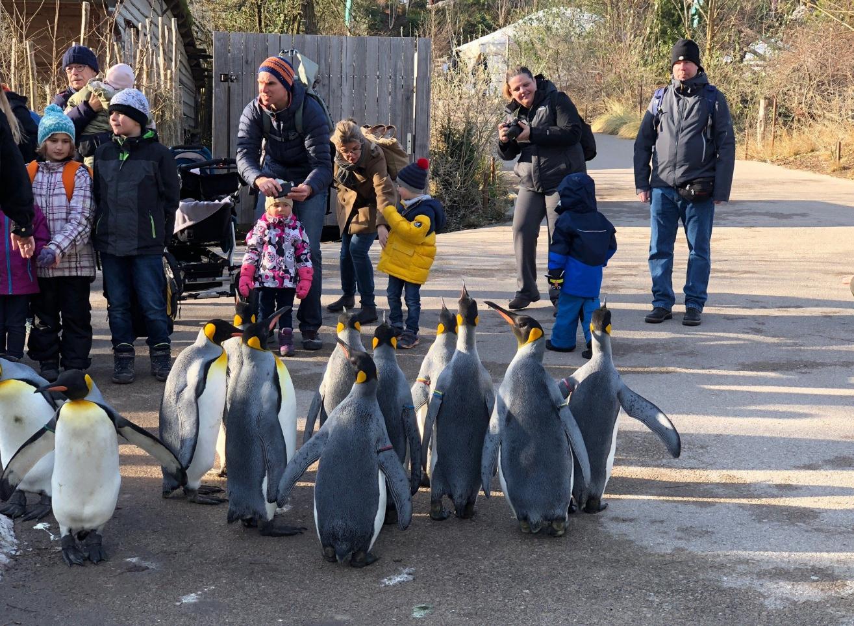 Пингвины в Zoo Zurich