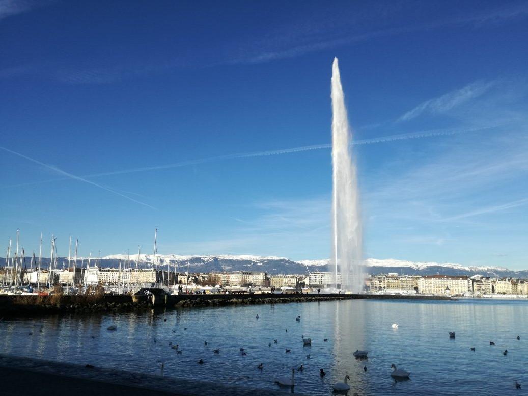 Лебеди не далеко от фонтана Jet d'Eau