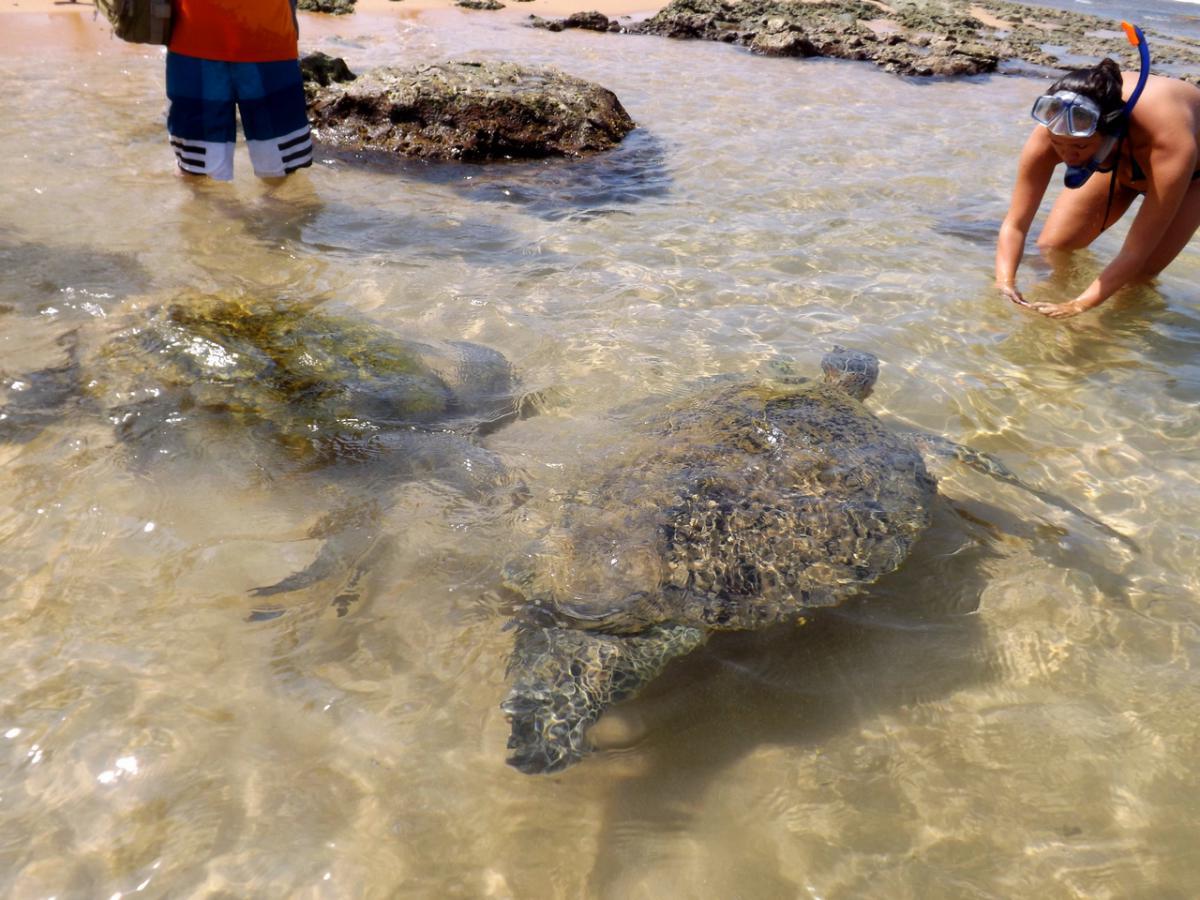На пляже морских черепах