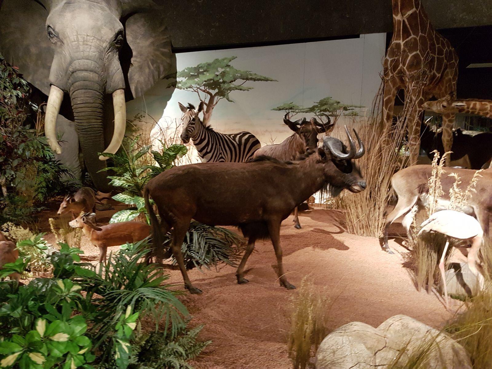 Чучела животных в музее естественной истории