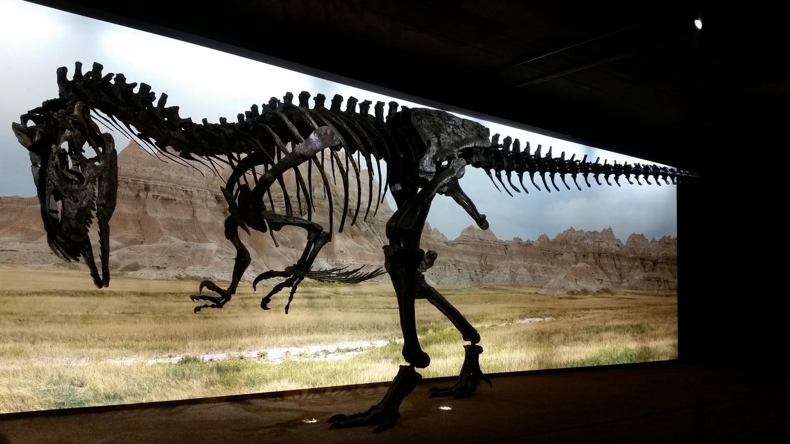 Скелет динозавра в музее Museum d'Histoire naturelle
