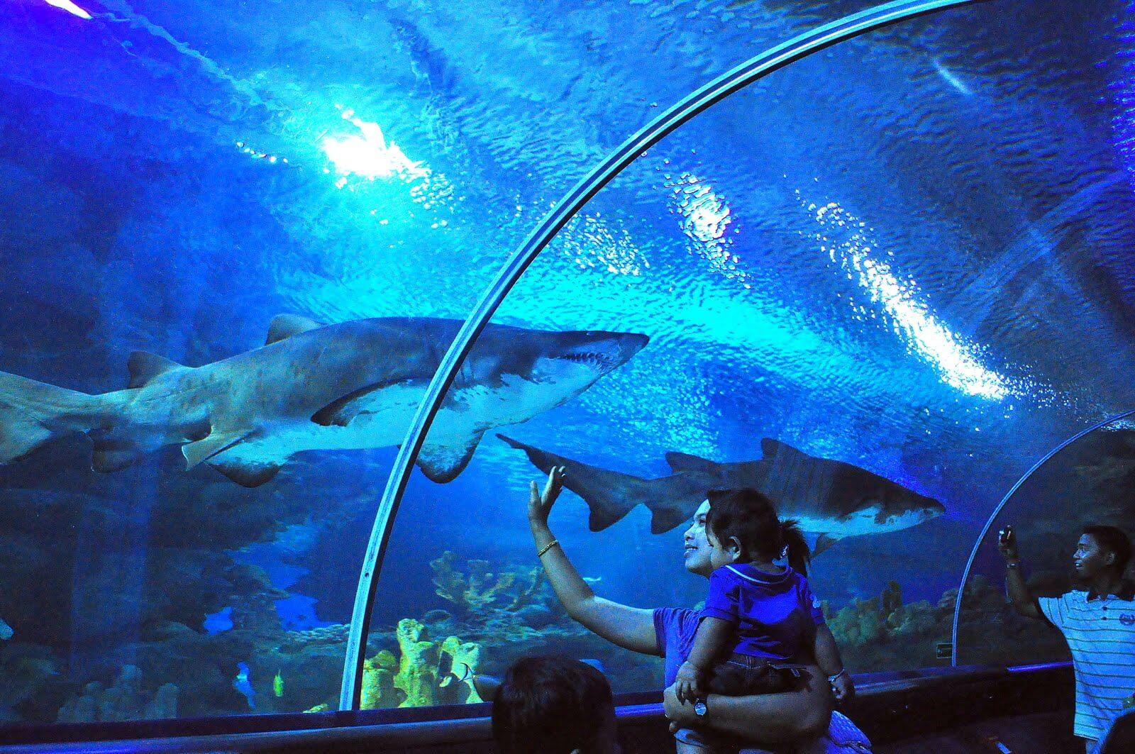 Один из самых больших аквариумов в мире
