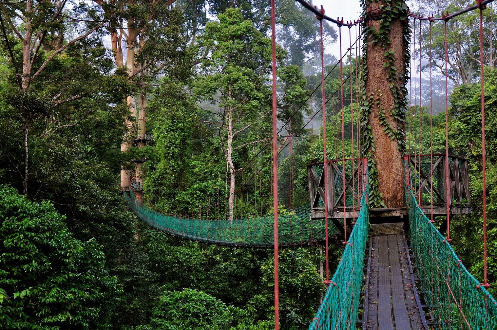 Парк с подвесными мостами Danum Valley