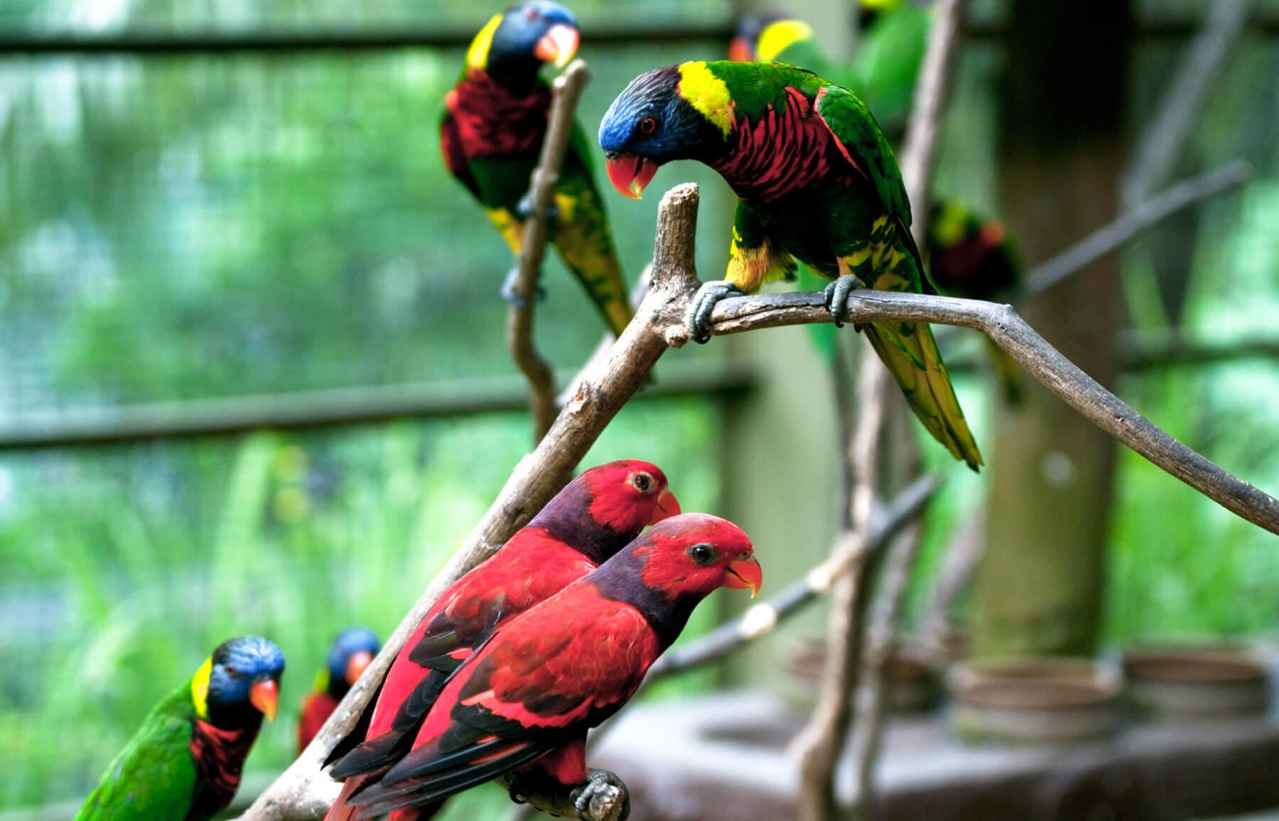 Яркие птички в Kuala Lumpur Bird Park