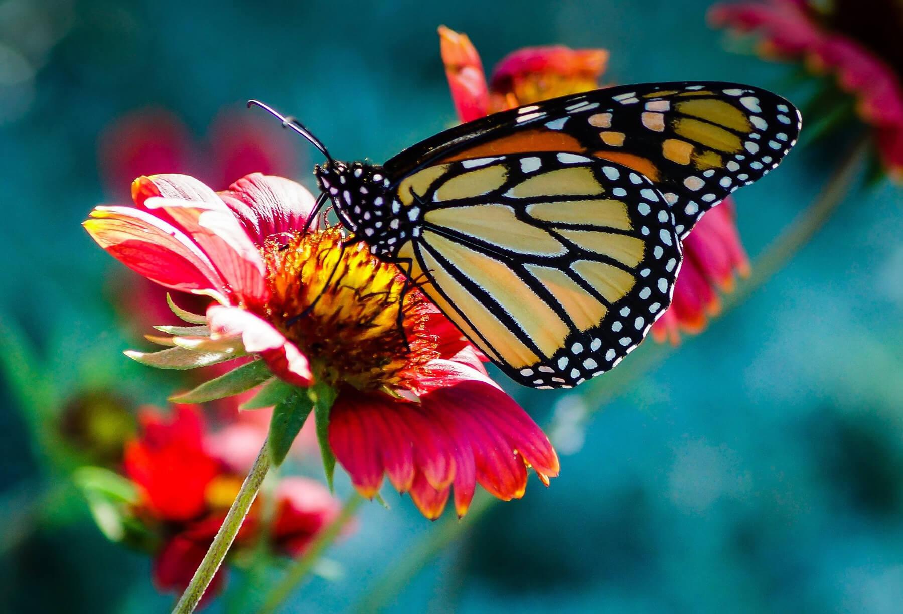 На ферме бабочек